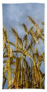 Wheat Standing Tall Beach Towel
