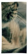 Whiskers Beach Towel