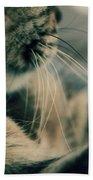 Whiskers Beach Sheet
