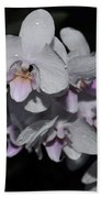 White And Pale Pink Phalaenopsis  165 Beach Towel