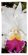 White And Purple Cattleya Orchid Beach Towel
