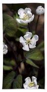 White Anemone Flowers Beach Towel