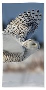 White Angel - Snowy Owl In Flight Beach Towel by Mircea Costina Photography