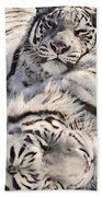 White Bengal Tigers, Forestry Farm Beach Towel