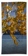 White Birch Tree In Autumn Along The Shore Of Crystal Lake Beach Towel