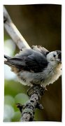 White-breasted Nuthatch Beach Towel