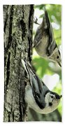 White Breasted Nuthatches Beach Towel