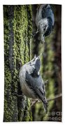 White Breasted Nuthatchs Beach Towel