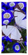 White Butterfly On Blue Cineraria Beach Towel