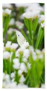 White Butterfly Beach Towel