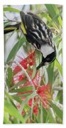 White-cheeked Honeyeater Feeding Beach Towel