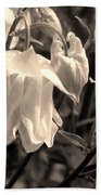 White Columbine Lanterns Monochrome Horizontal Beach Towel