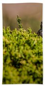 White-crowned Sparrow In A Bush Beach Towel