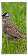 White Crowned Sparrow Beach Towel
