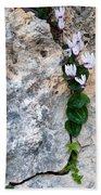 White Cyclamen Flowers Beach Towel