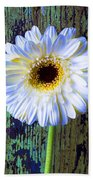 White Daisy With Green Wall Beach Towel