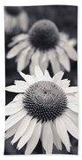 White Echinacea Flower Or Coneflower Beach Towel by Adam Romanowicz
