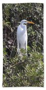 White Egret In The Swamp Beach Towel