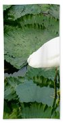 White Egret On Lilypads Beach Towel