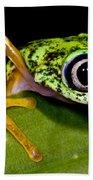White-eyed Leaf Frog Beach Towel