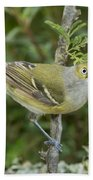 White-eyed Vireo Beach Towel
