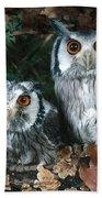 White Faced Scops Owl Beach Towel by Hans Reinhard