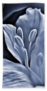 White Feathers Beach Towel
