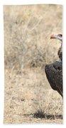 White-headed Vulture  Trigonoceps Occipitalis Beach Towel