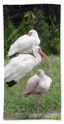 White Ibis Bliss Beach Towel