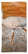 White Ibis Stroll Beach Towel