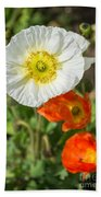 White Iceland Poppy - Beautiful Spring Poppy Flowers In Bloom. Beach Towel