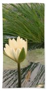 White Lily Near Pond Grass Beach Towel