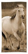 White Mare Approaches Number One Close Up Sepia Beach Towel