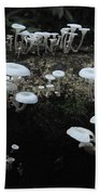 White Mushrooms Amazon Jungle Brazil 1 Beach Towel