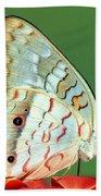 White Peacock Butterfly Anartia Beach Towel