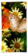 White Peacock Butterfly I V Beach Towel