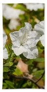 White Rhododendron Flowers In Bloom. Beach Towel