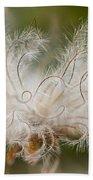 White Seedhad Of Mountain Avens Beach Towel