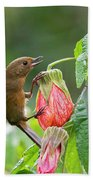 White-sided Flowerpiercer Beach Towel