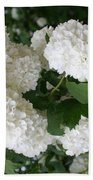 White Snowball Bush Beach Towel