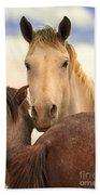 White Stallion Wild Horses On Navajo Indian Reservation  Beach Towel