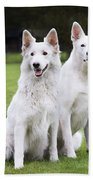 White Swiss Shepherd Dogs Beach Towel