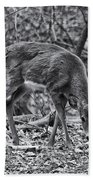 White-tail Deer Beach Towel