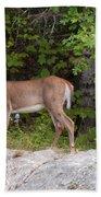 White Tailed Deer Beach Towel