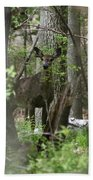White Tailed Deer Encounter  Beach Towel