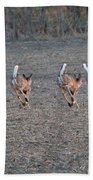 White Tailed Deer Running Beach Towel
