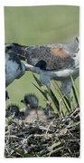 White-tailed Hawk Family Beach Towel