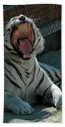 White Tiger Reno Nv 3 Beach Towel