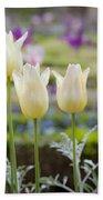 White Tulips In Parisian Garden Beach Towel