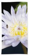 White Waterlily With Fly...   # Beach Towel
